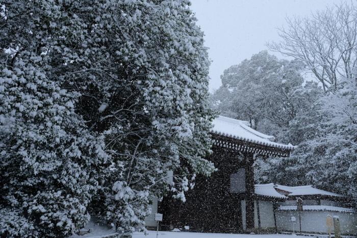 京都  東福寺界隈  1/15 雪積もったけど1時間半しか時間ないの巻_f0021869_22174335.jpg