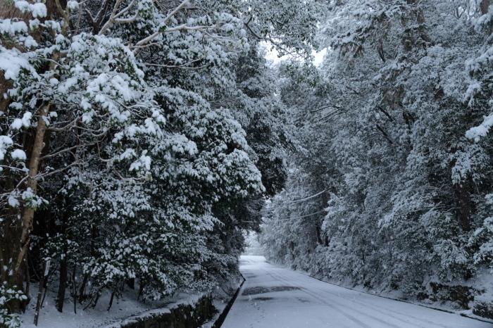 京都  東福寺界隈  1/15 雪積もったけど1時間半しか時間ないの巻_f0021869_22180775.jpg