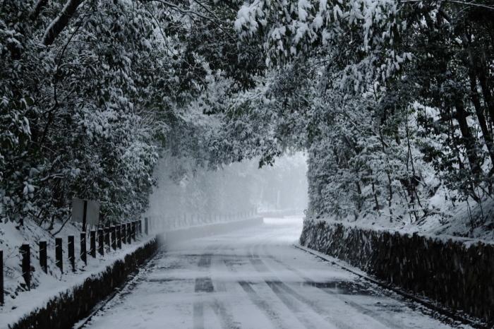 京都  東福寺界隈  1/15 雪積もったけど1時間半しか時間ないの巻_f0021869_22184344.jpg