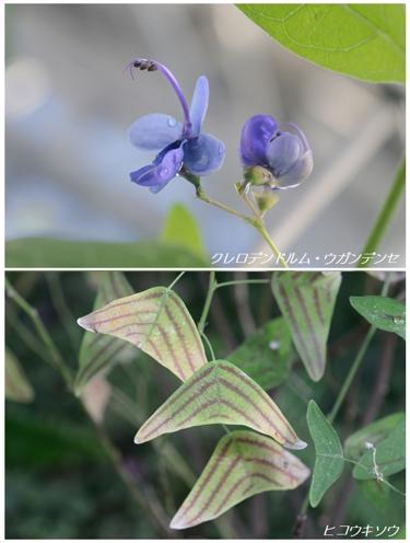 君たち飛べる?(温室の不思議植物たち(1))_a0204089_23514771.jpg
