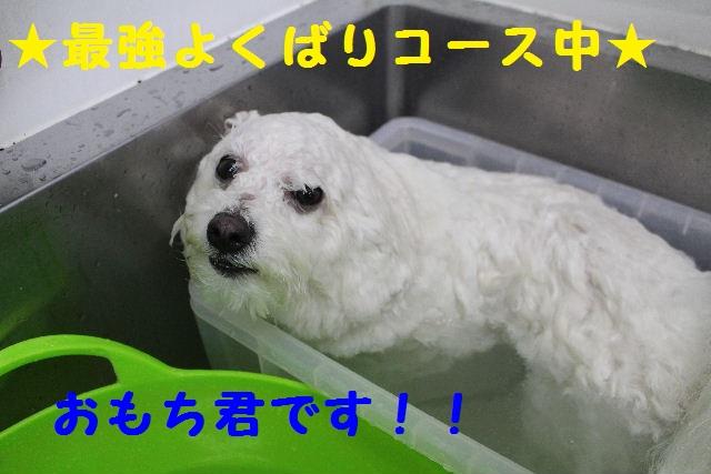 b0130018_15461099.jpg