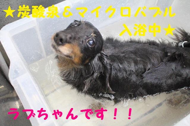 b0130018_1558029.jpg