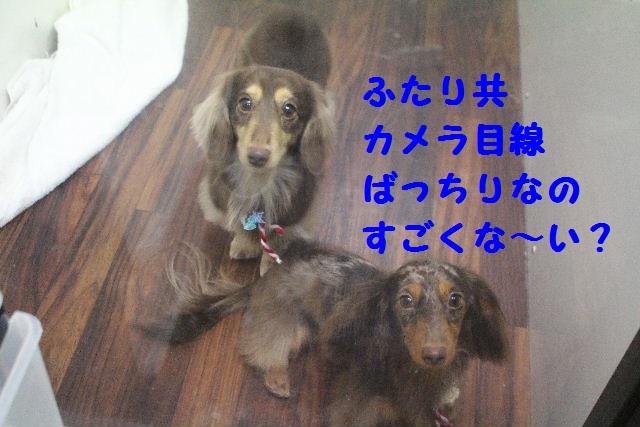b0130018_1633360.jpg