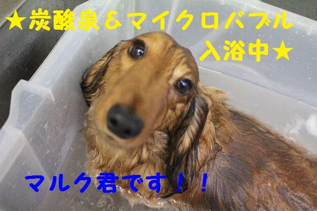 b0130018_1643528.jpg