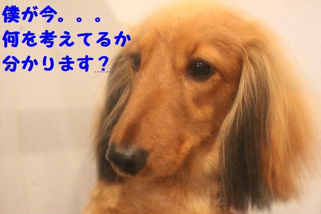 b0130018_166764.jpg