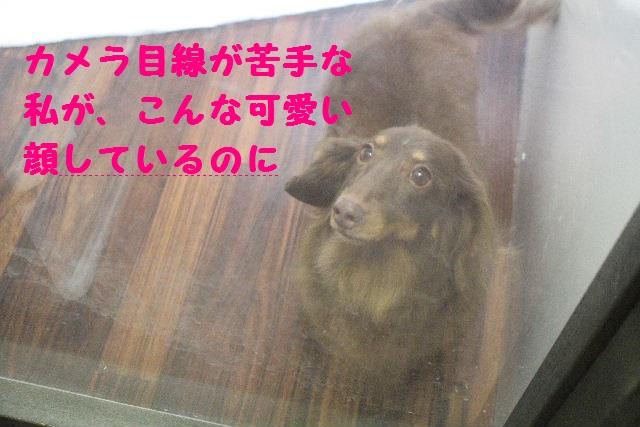b0130018_168166.jpg