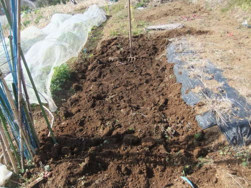 白菜の収穫。。。_b0137932_14295024.jpg