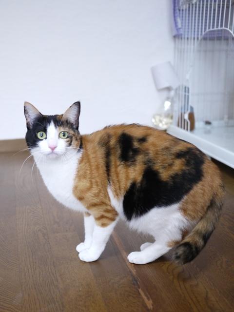 猫のお留守番 みーたんちゃん編。_a0143140_23132995.jpg