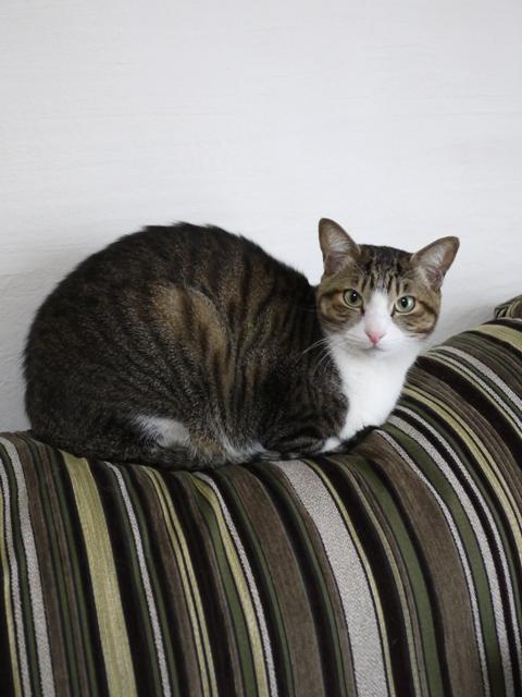 猫のお留守番 たんたんくん編。_a0143140_239554.jpg