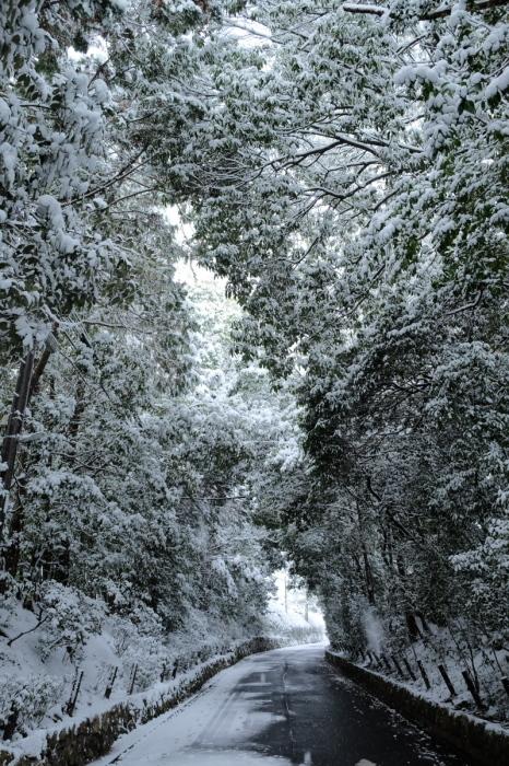 京都  東福寺界隈  1/15 雪積もったけど1時間半しか時間ないの巻_f0021869_22205346.jpg