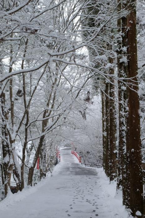 京都  東福寺界隈  1/15 雪積もったけど1時間半しか時間ないの巻_f0021869_22215700.jpg