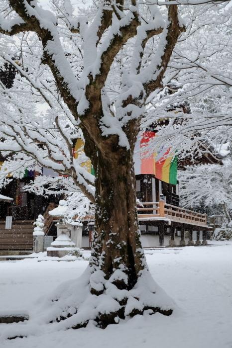 京都  東福寺界隈  1/15 雪積もったけど1時間半しか時間ないの巻_f0021869_22224321.jpg