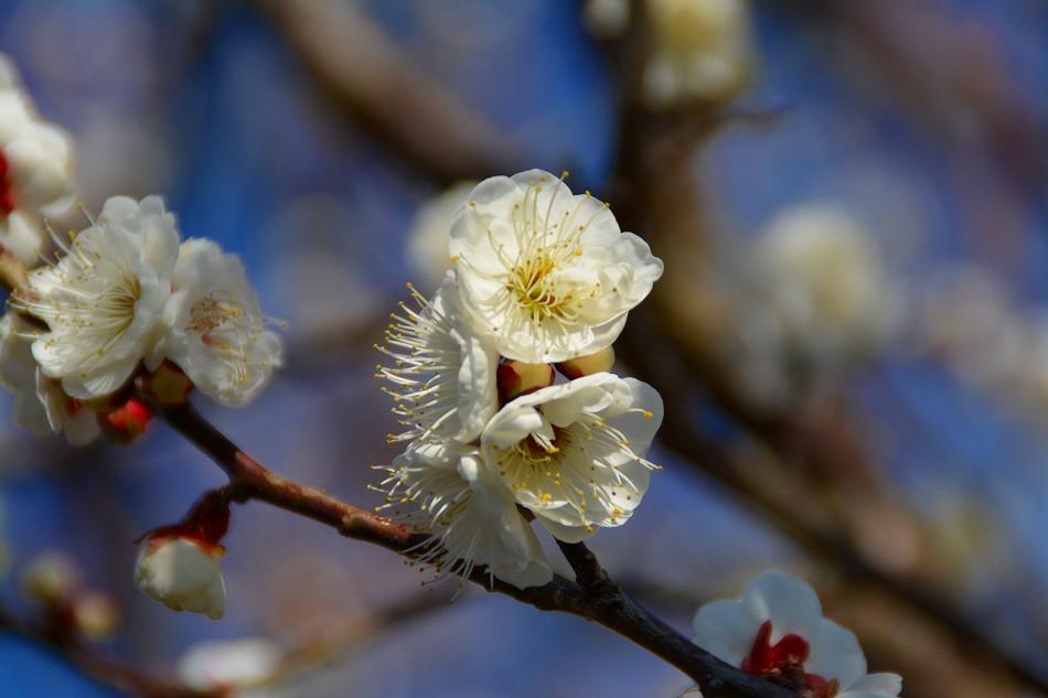 梅と水仙のデジブックを公開しました。_c0265095_21263362.jpg