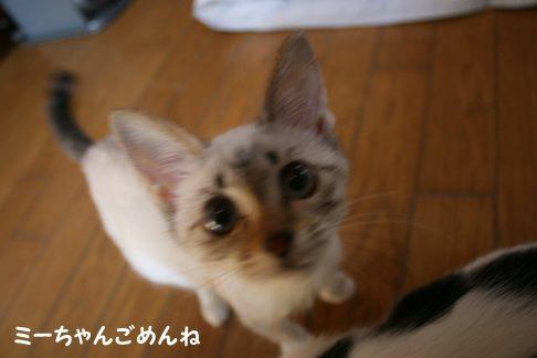 ミラコちゃんのこと 助けることが出来ませんでした・・・_f0242002_21504311.jpg