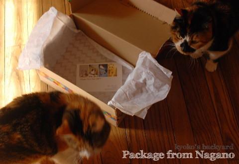 信州からの素敵な小包♪_b0253205_06004718.jpg