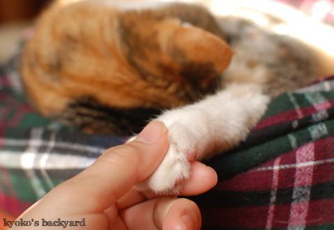 お昼寝の邪魔をされて (動物・ペット部門)_b0253205_07214661.jpg