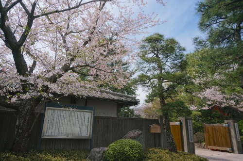 春のお出かけ情報 〜お花見編〜_f0201310_16235299.jpg