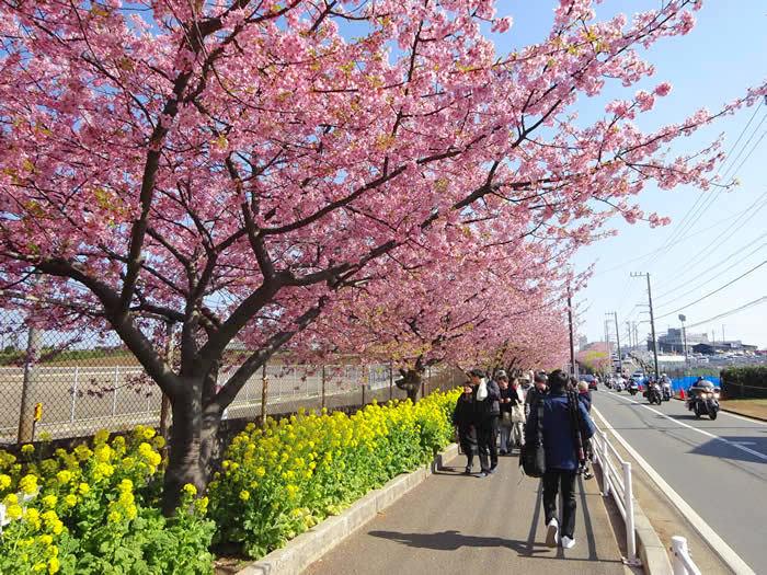 春のお出かけ情報 〜お花見編〜_f0201310_16552531.jpg