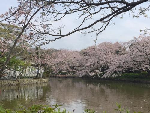 春のお出かけ情報 〜お花見編〜_f0201310_19130039.jpg