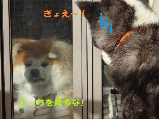 f0121712_00032572.jpg
