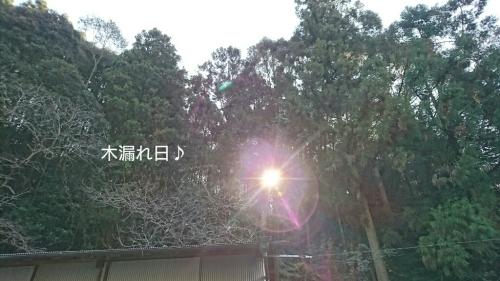 b0187620_19502399.jpg
