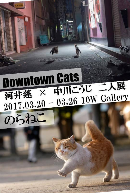 河井蓬「Downtown Cats」 × 中川こうじ「のらねこ」 は終了しました。_f0138928_950343.jpg