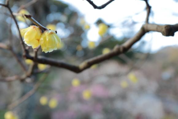 鎌倉散歩_f0217933_11113862.jpg