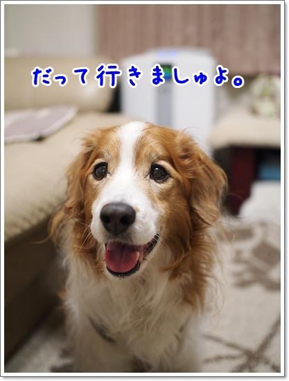 d0013149_00175980.jpg