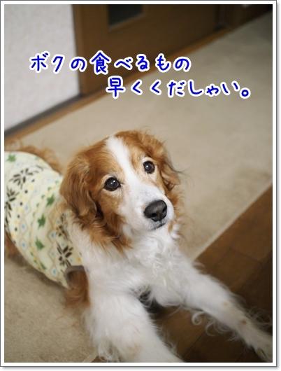 d0013149_00314766.jpg