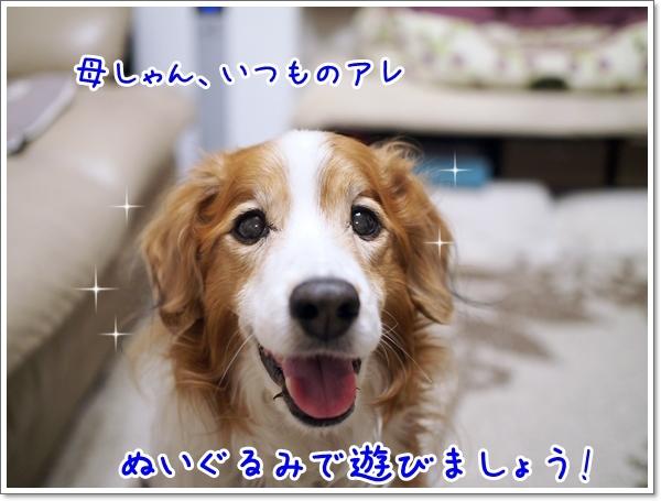 d0013149_00420704.jpg