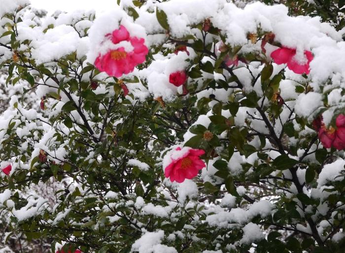 三年ぶりの雪便り (上) _b0093754_22415260.jpg