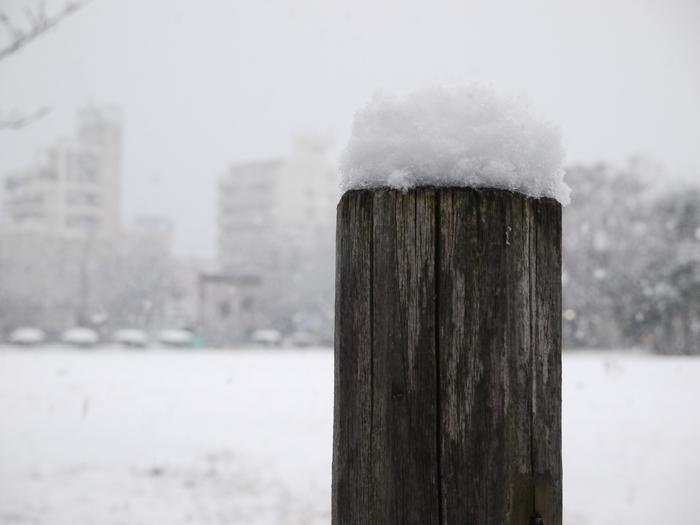 三年ぶりの雪便り (上) _b0093754_22445215.jpg