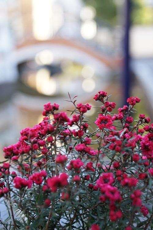 濃いピンクの花_a0292060_14575603.jpg