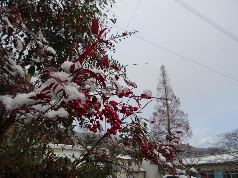 孝子の森も うっすらと雪化粧  by  (TATE-misaki)_c0108460_20380735.jpg