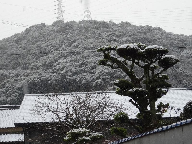 孝子の森も うっすらと雪化粧  by  (TATE-misaki)_c0108460_20381809.jpg