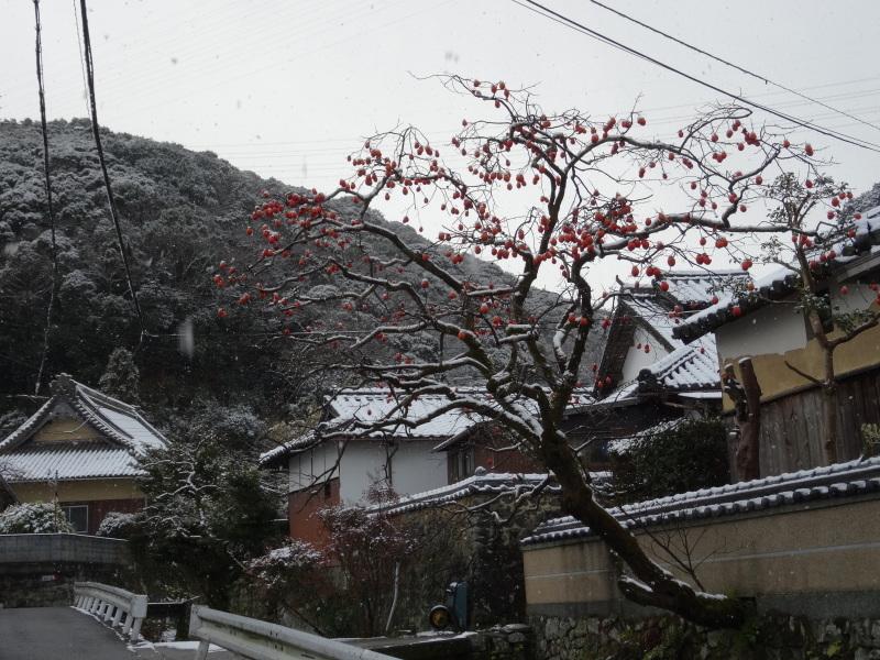 孝子の森も うっすらと雪化粧  by  (TATE-misaki)_c0108460_20382957.jpg