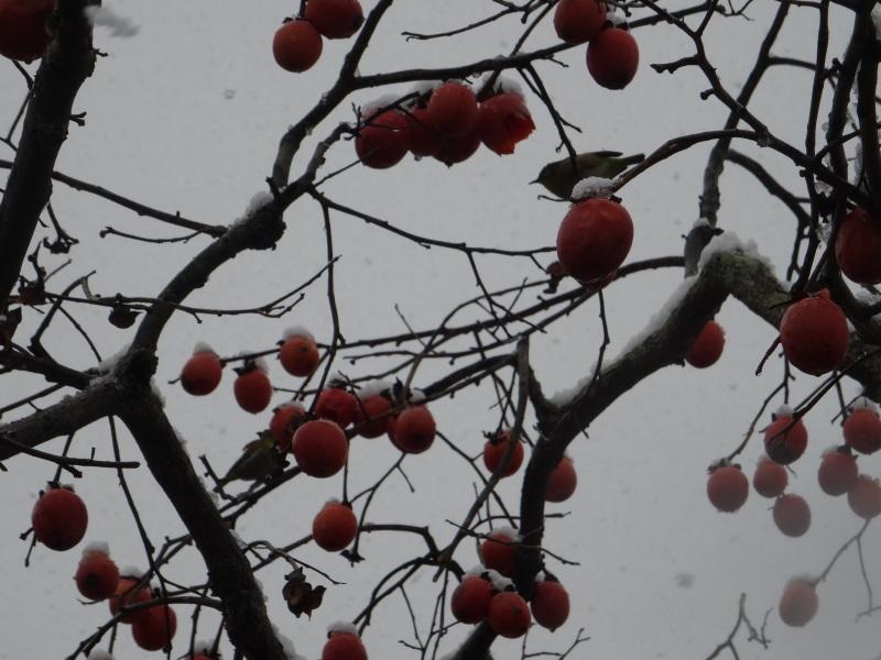 孝子の森も うっすらと雪化粧  by  (TATE-misaki)_c0108460_20394449.jpg