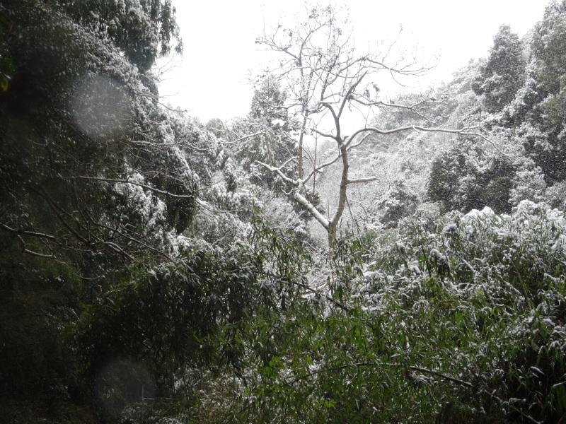 孝子の森も うっすらと雪化粧  by  (TATE-misaki)_c0108460_20400784.jpg