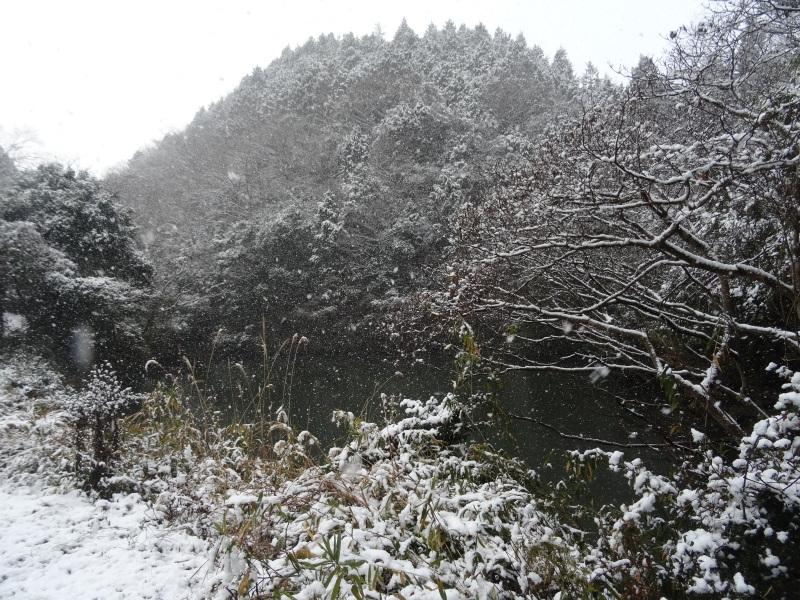 孝子の森も うっすらと雪化粧  by  (TATE-misaki)_c0108460_20402355.jpg