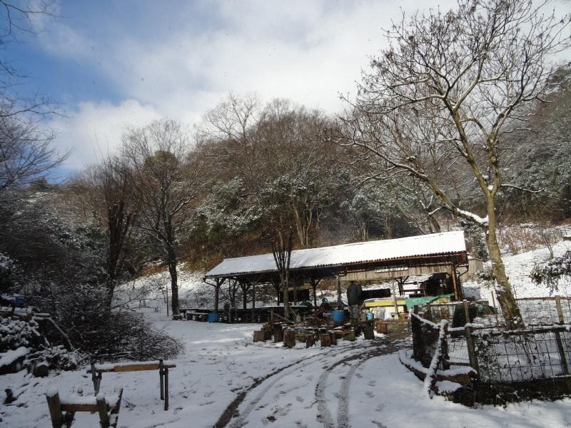 孝子の森も うっすらと雪化粧  by  (TATE-misaki)_c0108460_20410284.jpg
