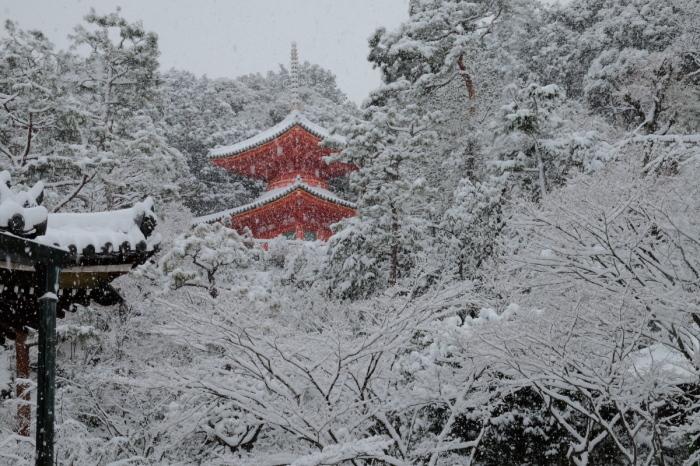 京都  今熊野観音寺  1/15 雪積もったけど1時間半しか時間ないの巻_f0021869_22284636.jpg