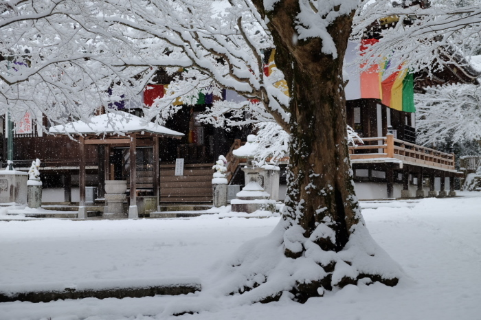 京都  今熊野観音寺  1/15 雪積もったけど1時間半しか時間ないの巻_f0021869_22313166.jpg