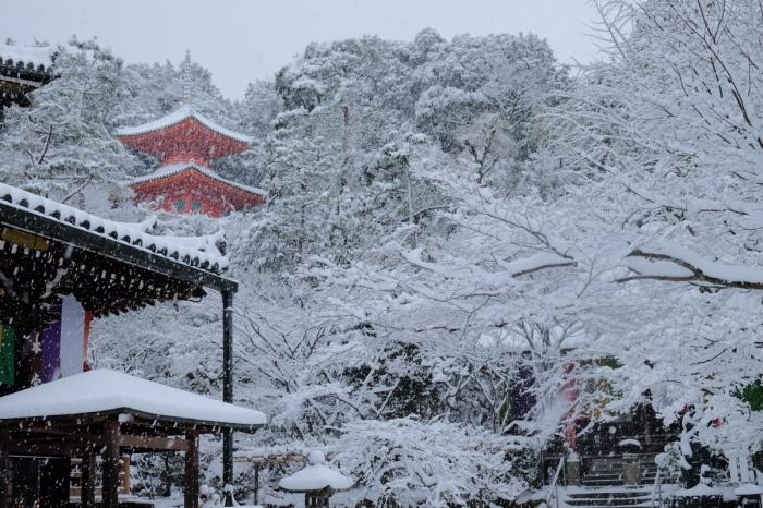 京都  今熊野観音寺  1/15 雪積もったけど1時間半しか時間ないの巻_f0021869_22340104.jpg