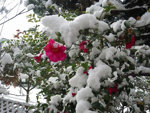 3年目の大雪_b0326483_19582816.jpg