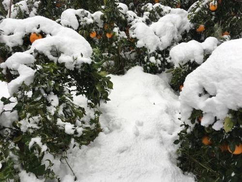 雪_d0141987_19172188.jpg