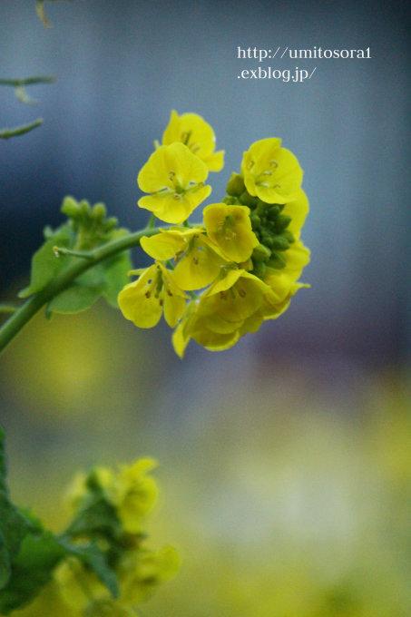 黄色♪_b0324291_19471515.jpg