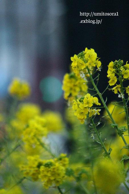 黄色♪_b0324291_19471749.jpg