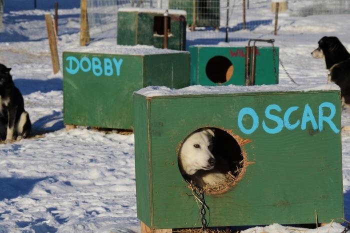 《犬ぞり》極北人と犬_d0112928_10530424.jpg