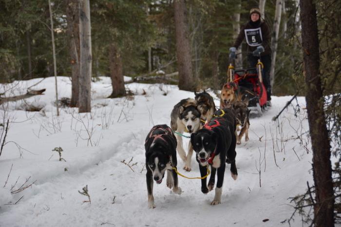 《犬ぞり》極北人と犬_d0112928_11071729.jpg