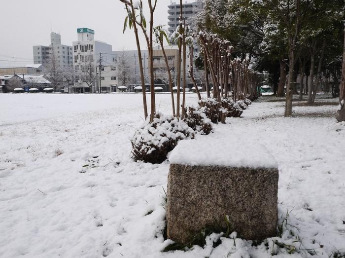 三年ぶりの雪便り (下)  _b0093754_22575821.jpg